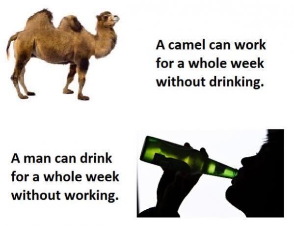 Topvicc: camel_human