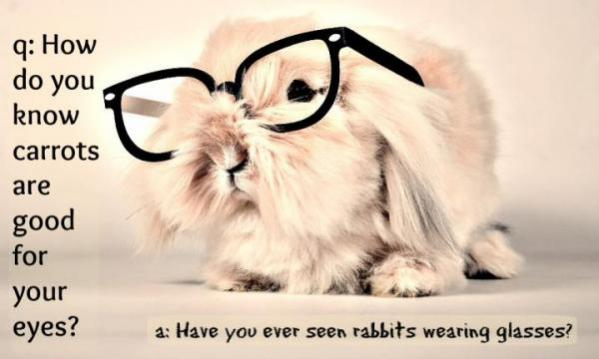 Topvicc: rabbit