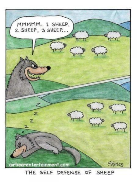 Topvicc: sheep