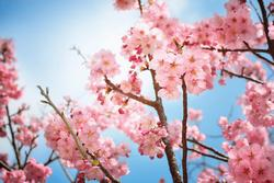 blooming jelentese magyarul