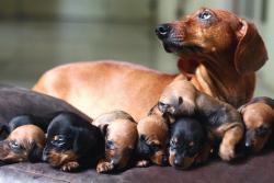 breed up jelentese magyarul