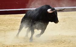 bull jelentese magyarul
