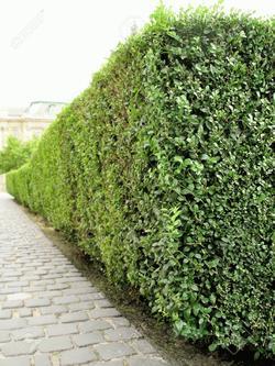 to bush jelentese magyarul