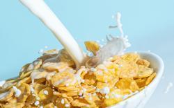 cereal jelentese magyarul
