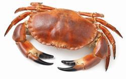 crab jelentese magyarul