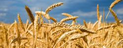 crop jelentese magyarul