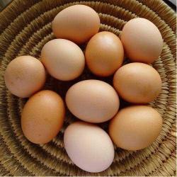 egg jelentese magyarul