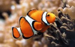 fish jelentese magyarul