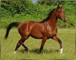 horse jelentese magyarul