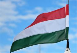 Hungarian Grey jelentese magyarul