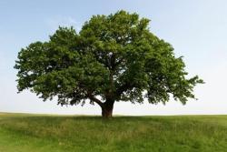 oak jelentese magyarul