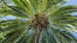 palm jelentese magyarul