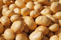 potato jelentese magyarul