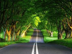 road jelentese magyarul