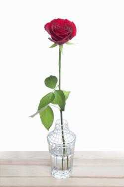 rose jelentese magyarul