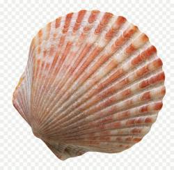 shell jelentese magyarul