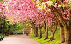 spring from jelentese magyarul