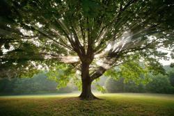 tree jelentese magyarul