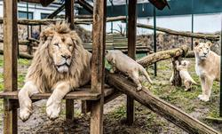 állatkert angolul