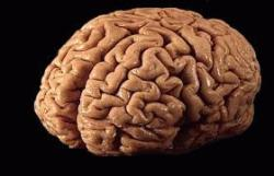 agy angolul