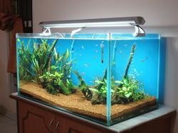 akvárium angolul