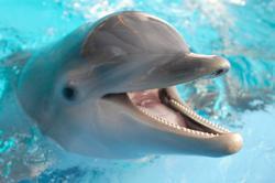 delfin angolul