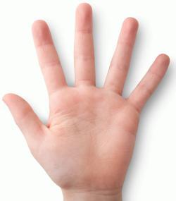 kézfej angolul