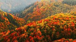 ősz angolul