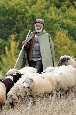 pásztor angolul