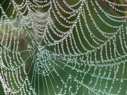 pókháló angolul
