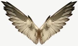 szárny angolul